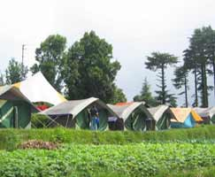 Holiday In Dhanaulti