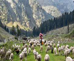 Package Tour To Dhanaulti